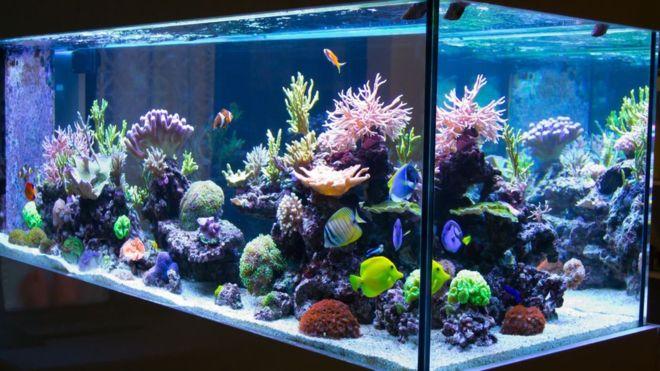 Возврат аквариума