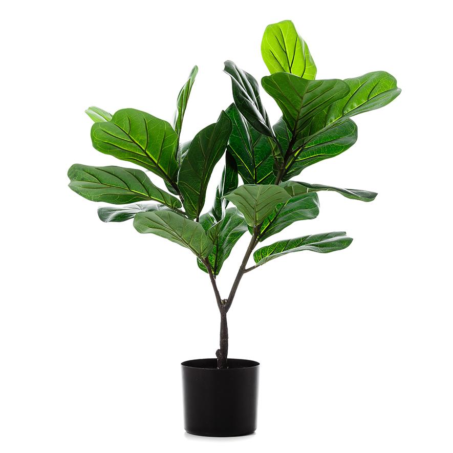 Возврат растения